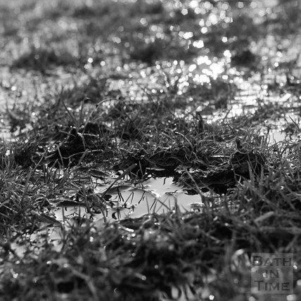 Rain drenched grass, Bathampton 22 January 1971
