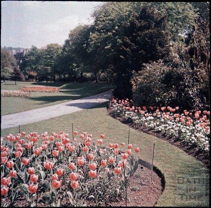 Flowers in Henrietta Park, Bath, spring 1937?