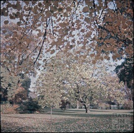 Royal Victoria Park, Bath, Autumn, 1937?