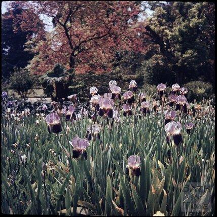 The Botanical Gardens, Royal Victoria Park, Bath, 1937?