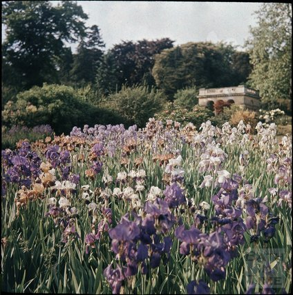 The Botanical Gardens, Royal Victoria Park, Bath, 1937?