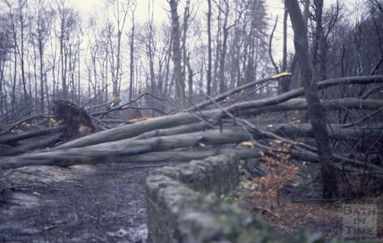 Storm damage in Rainbow Wood, 1990