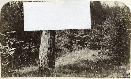 Unidentified woodland, c.1870