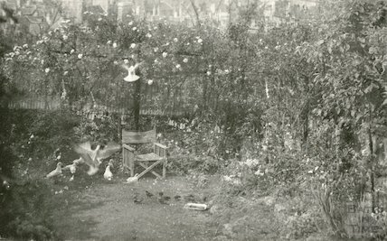 Doves in the photographer's back garden in Sydney Buildings, Bath, c.1930s