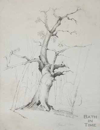 Sketch of Acacia tree at Hanham Court, 1832