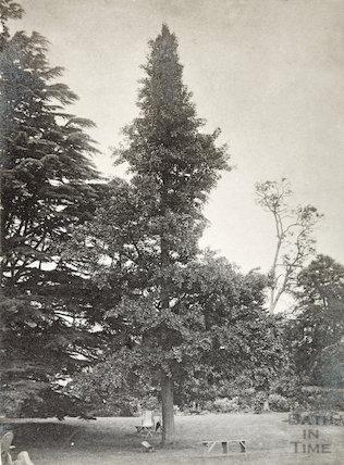 Vicarage Garden Bitton,
