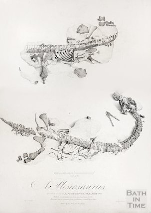 Plesiosaurus found at Bitton, 1830