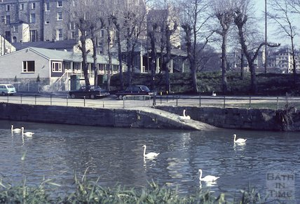 Swans on the River Avon, Bath, 1965