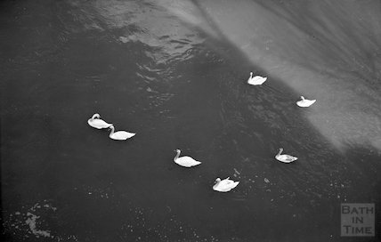 The ever present swans close to Pulteney Bridge, c.1960s