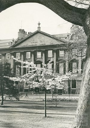 Blossom on a newly planted tree in Queen Square , Bath, c.1960s