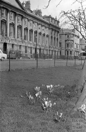 Crocuses in Queen Square, Bath, c.1967