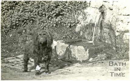 The photographer's dog by the well on Horseshoe Walk, Bath, c.1915