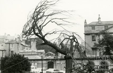 Elm Tree Felling at Queen's Parade, Bath 1979