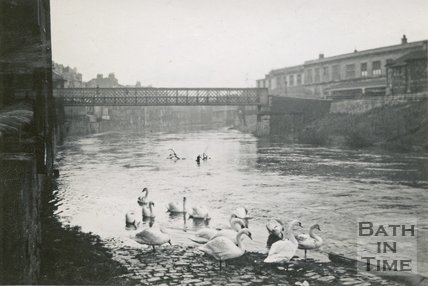 Swans on the flooded footpath of the River Avon opposite Bath Spa Station, Bath 1948