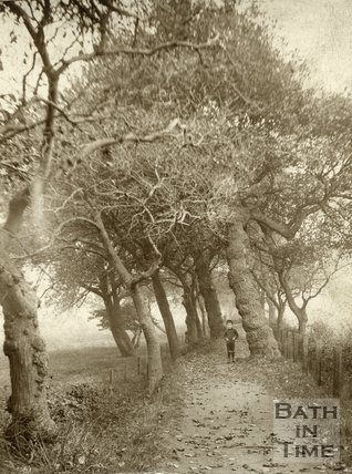 A boy standing on a path in a tree-lined avenue, c.1880s