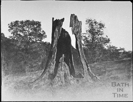 Decayed oak tree, Ashwicke Park 1853/58