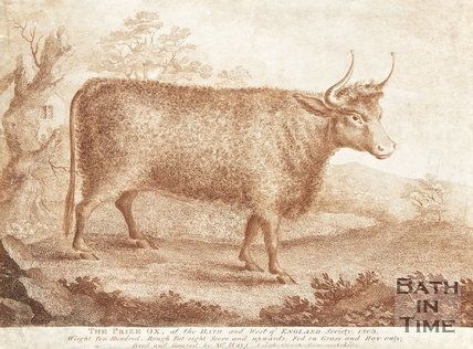 Engraving of the Prize Ox at Bath and West of England Society 1803