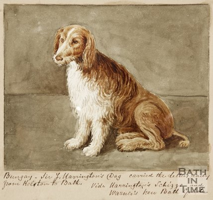 Image of Sir J. Harington's dog.