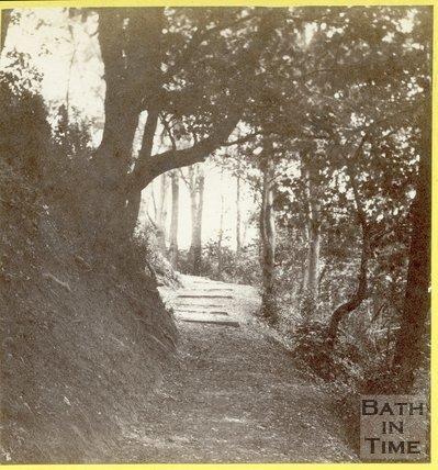 Woodland scene near Lord Rivers (estate), Bath 1875