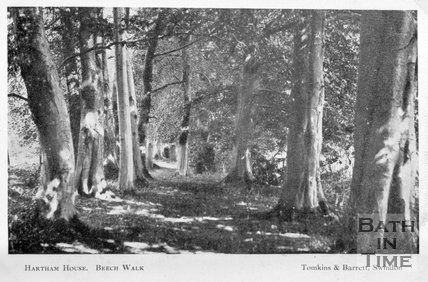 The Beech Walk, Hartham House, Wiltshire, c.1910s