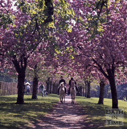Two horse riders along a beautiful blossom lined path in Royal Victoria Park, Bath, c.1980