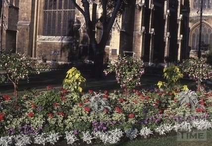 Orange Grove, Bath - Floral City 1976