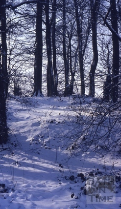 Rainbow Woods, Bath in snow 1978