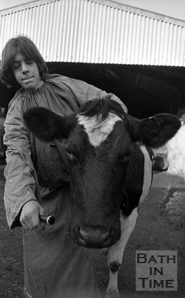 Tim Packer of Upper Swainswick recording cows, 4 January 1983