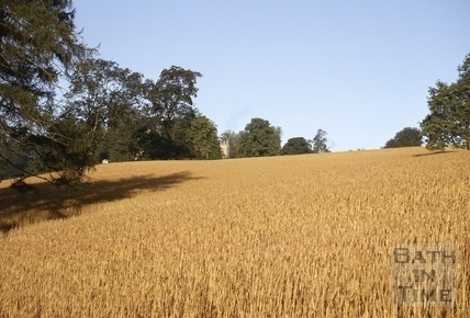 The field below Midford Castle before harvesting 1964