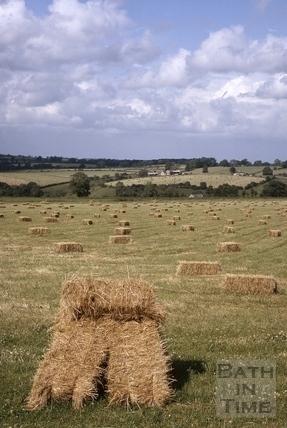 Bales of hay, Midford Valley 1964