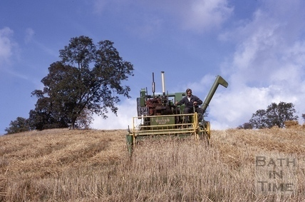 Harvesting in the Midford Valley 1964