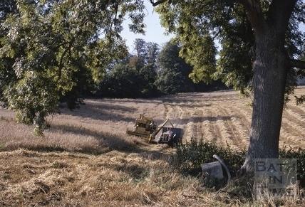 Harvesting, Midford area 1968