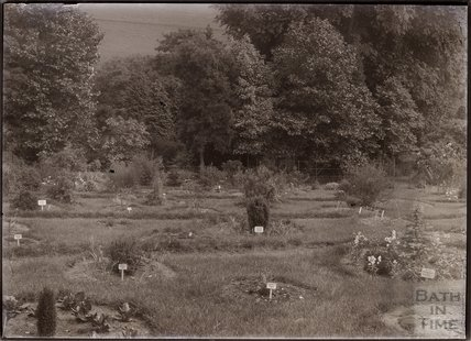 General view of Annie's Arboretum in the grounds of Eagle House, Batheaston c.1910