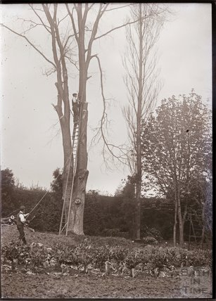 Cutting tall trees in the grounds of Eagle House, Batheaston c.1909