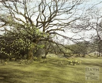 Springtime, Botanical Garden, Royal Victoria Park, Bath 1961