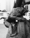 Jeune Elephant Pris au Piege