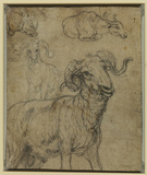 Ram and buffalo (verso)