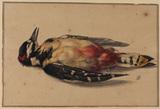 Dead woodpecker