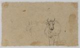 Cows (verso)