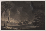 Landscape, with palm trees bent in the wind