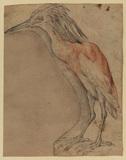 Heron (recto)