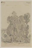 Study of trees at Tocques