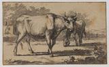 Cows (recto)