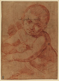 Study for the infant John the Baptist (recto)