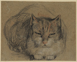 Cat - study for 'The Cut Finger' (S.H. Whitbread Collection, Southill)