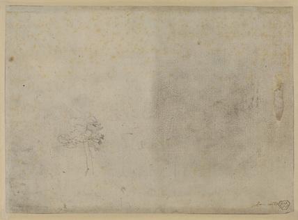 Study of trees (verso)