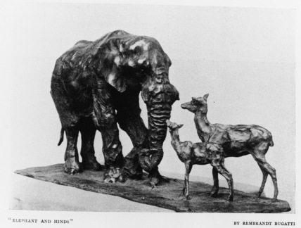 Elephant and Hinds