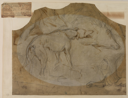 Studies of a staghound and the head of a stag