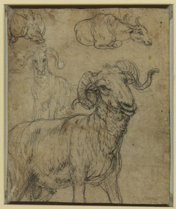 Ram and buffalo (verso)