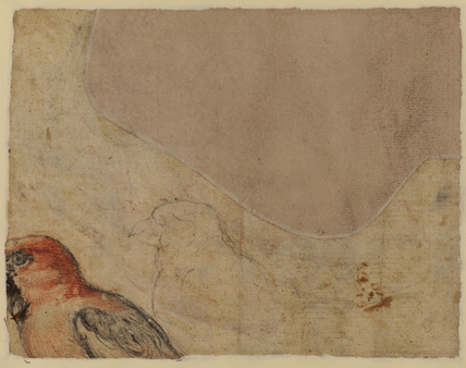 Bird study (possibly a parrot) (verso)